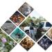 Invasive Species Report
