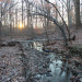 small wooded creek at sunrise