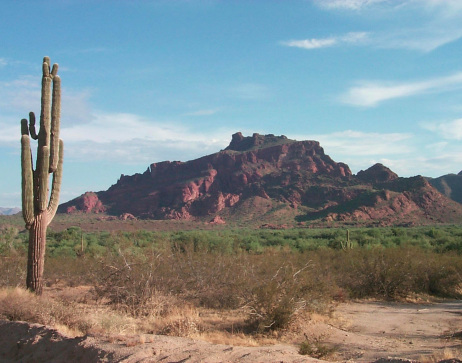 Red Mountain -- and a cactus