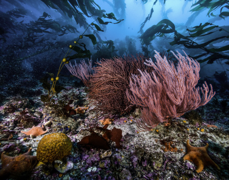 A healthy benthic community is protected within the Channel Islands National Park, CA. Image: Susanna Pershern, National Park Service