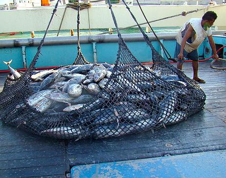 Fish Offloading in Majuro, Marshall Islands Photo credit: Giff Johnson