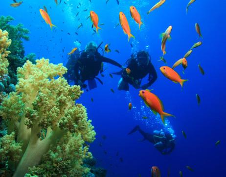 Scuba divers near coral