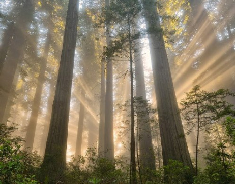 Trees with sun beams