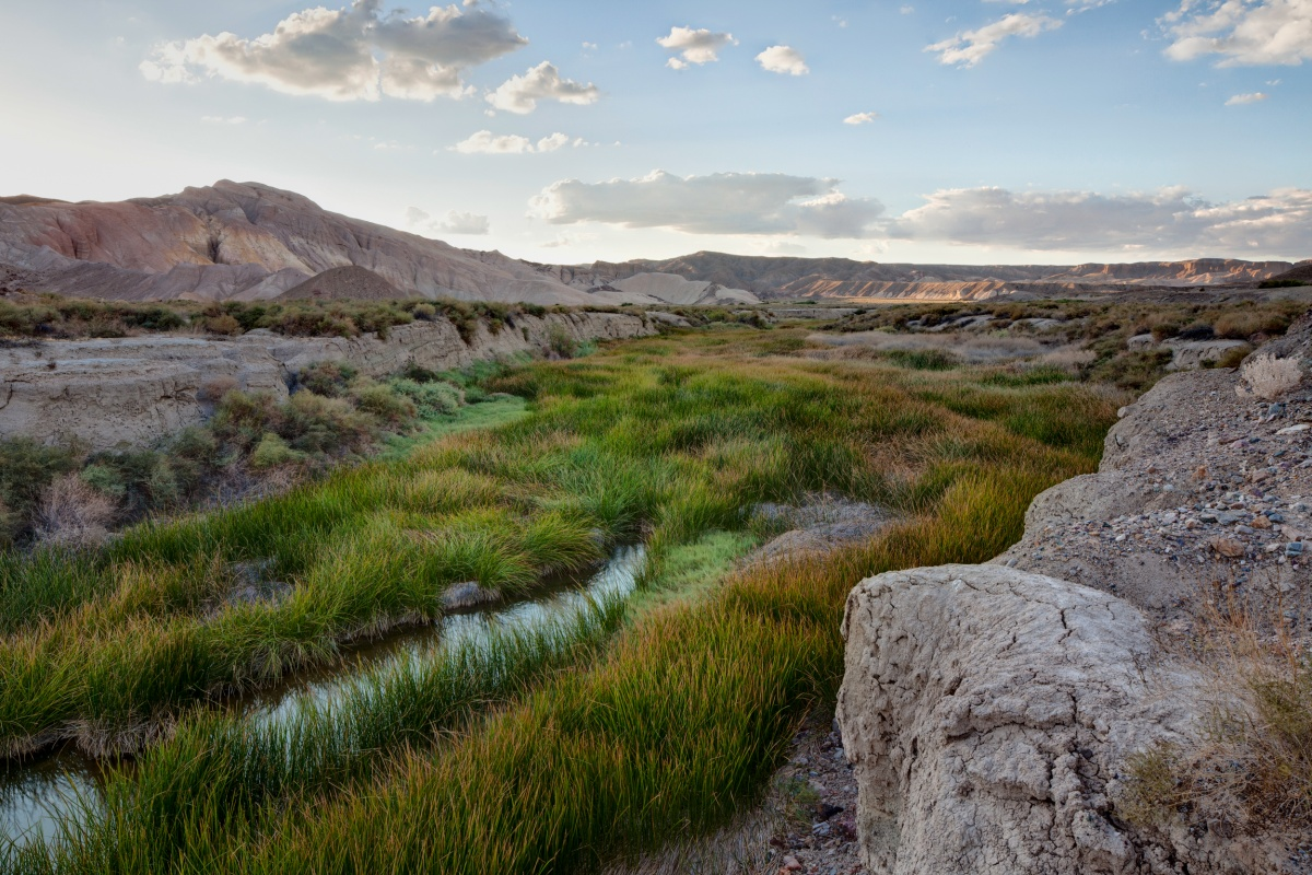 Green, yellow, and brown colored grass flank the sides of the Amargosa River.