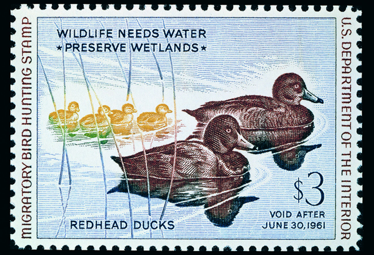 An enlargement of a stamp that shows a drawing of two ducks swimming on a pond with four ducklings swimming behind them.