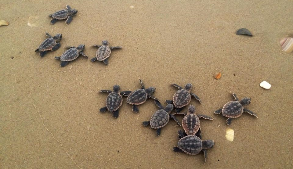 turtles on a beach