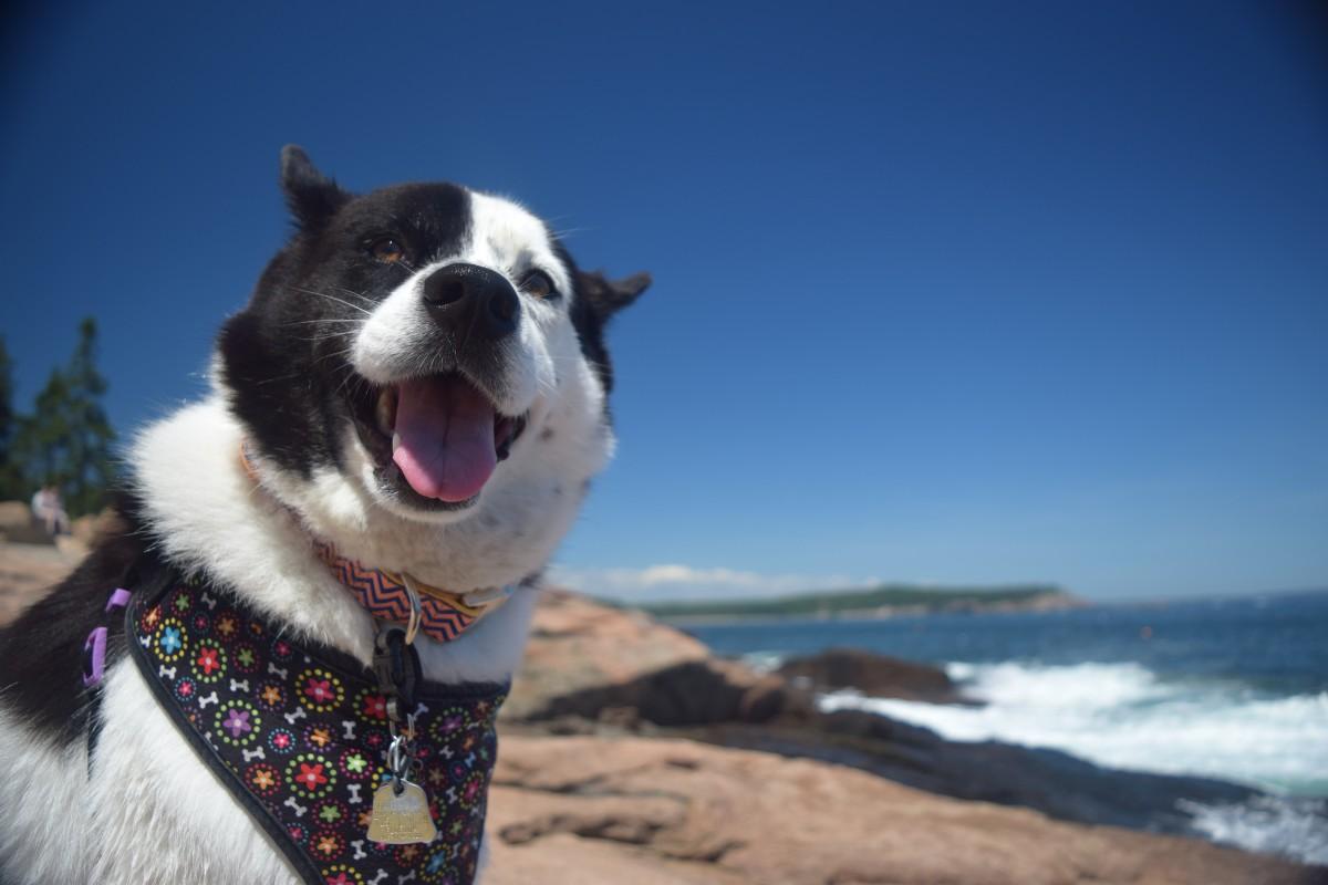 Best Dog-Friendly Public Lands | U.S. Department of the Interior