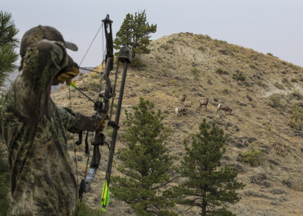 Everything you need to know about hunting on public lands for Missouri out of state fishing license