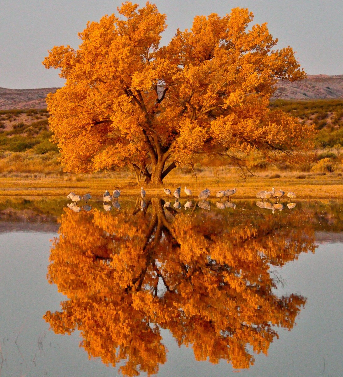 A tree with bright yellow leaves stands next to a still pond that shows the tree's reflection.