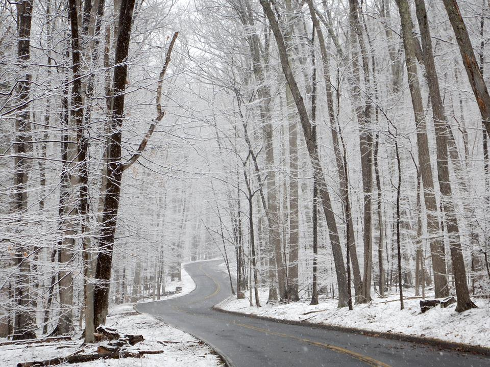 Snow coats tall trees along a winding road