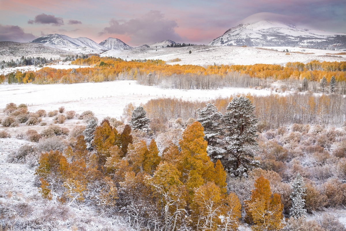 Snow covers mountain tops and orange Aspen trees