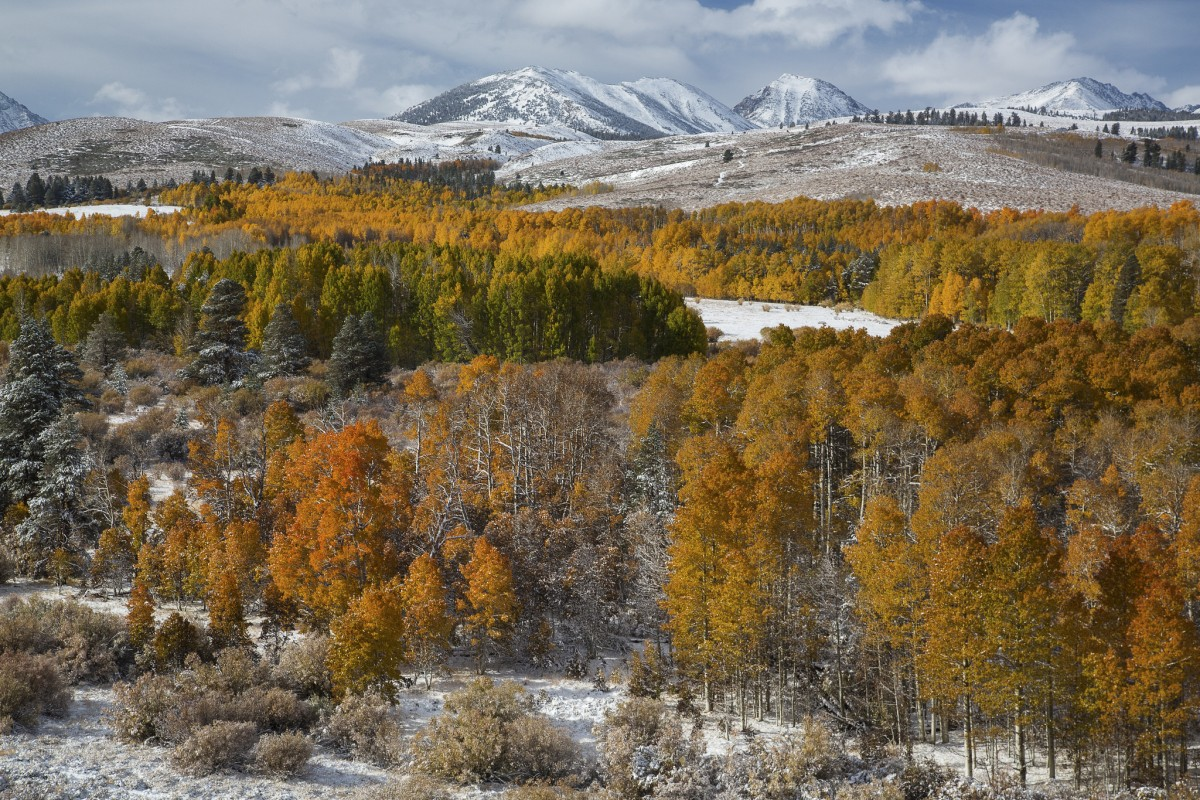 A forest of yellow trees dusted with snow covers a field that runs up to hills and mountains on the horizon.