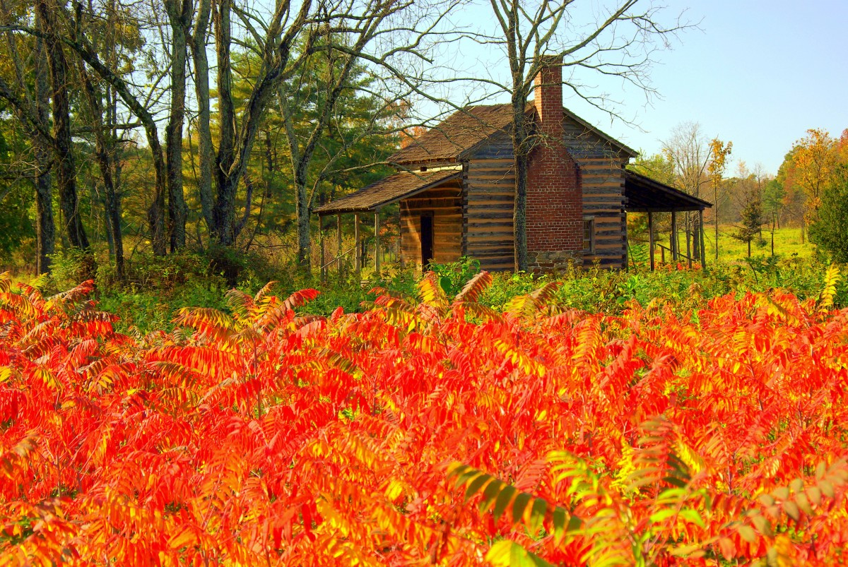 Red leaves in foreground with brown house in background.