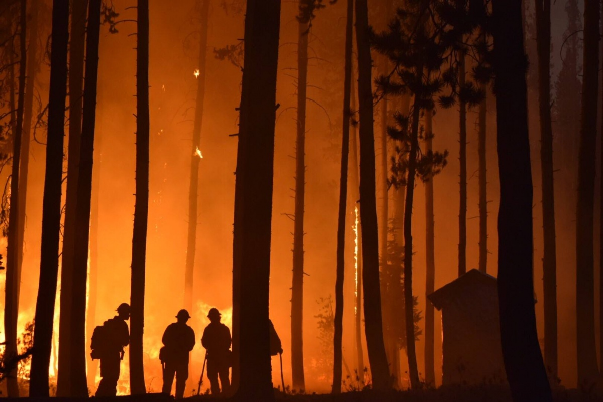 Four firefighters in helmets and safety gear stand in a forest at night silhouetted by the flames of a nearby fire.