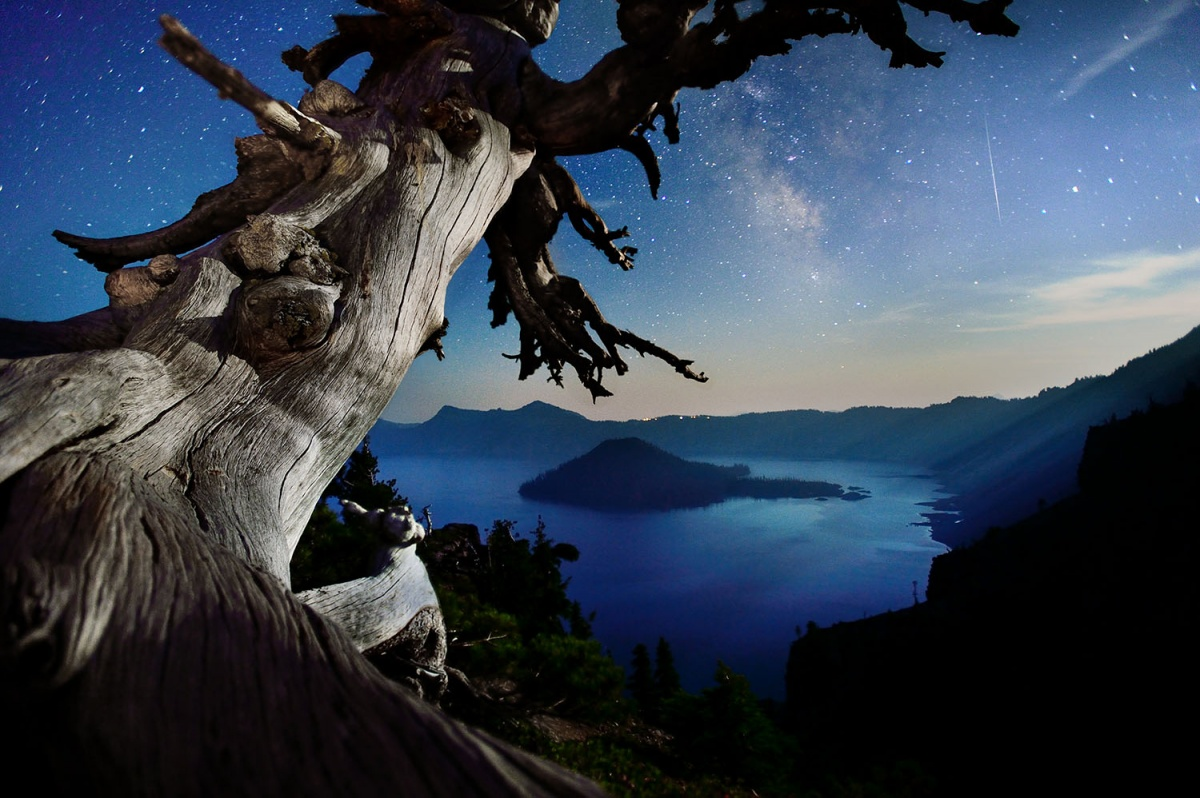 Tree trunk looms over a drop off towards water, a starry blue sky sits in the background