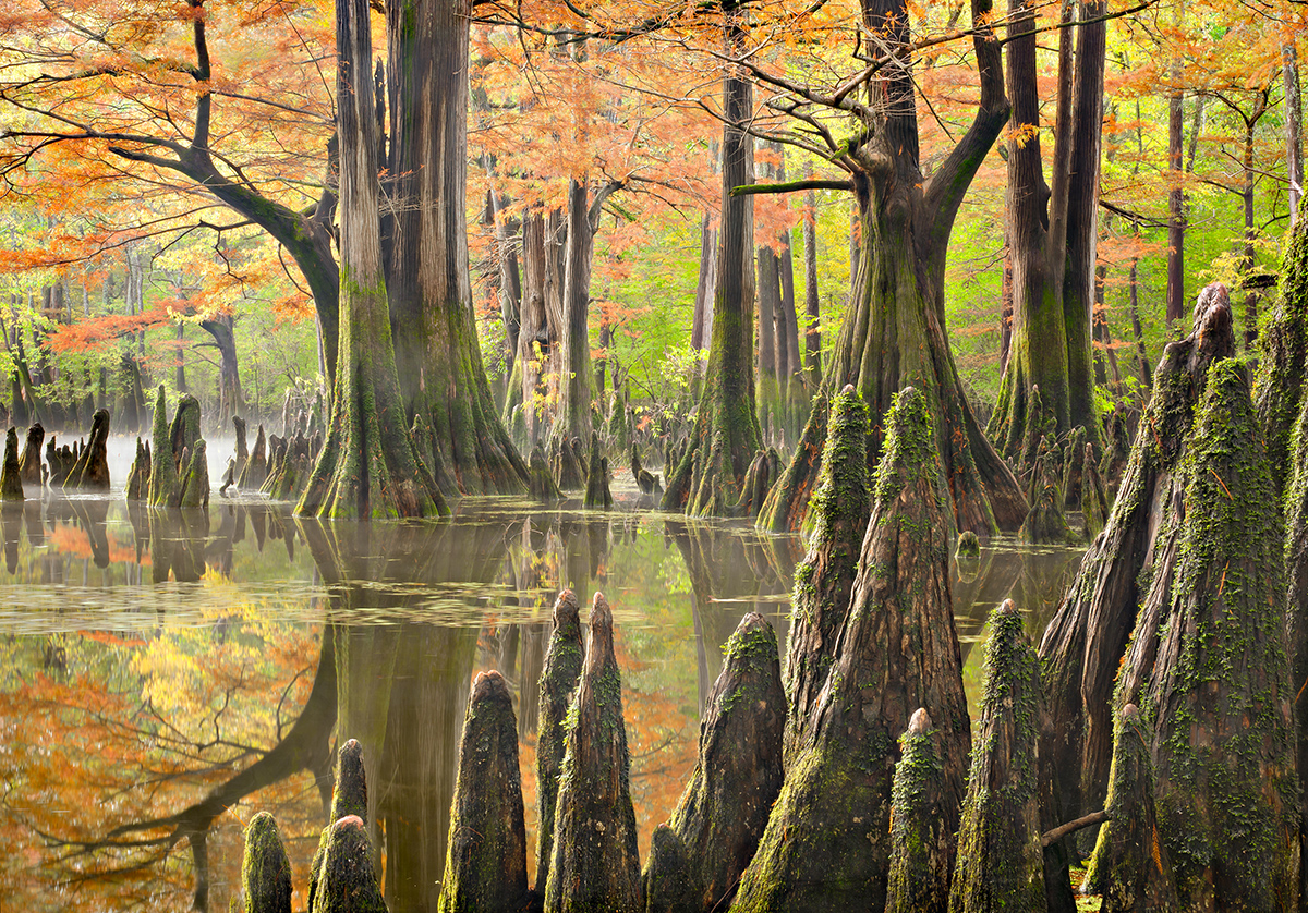 Large trees and pointy tree stubs stick up from water and are surrounded by beautiful orange leaves