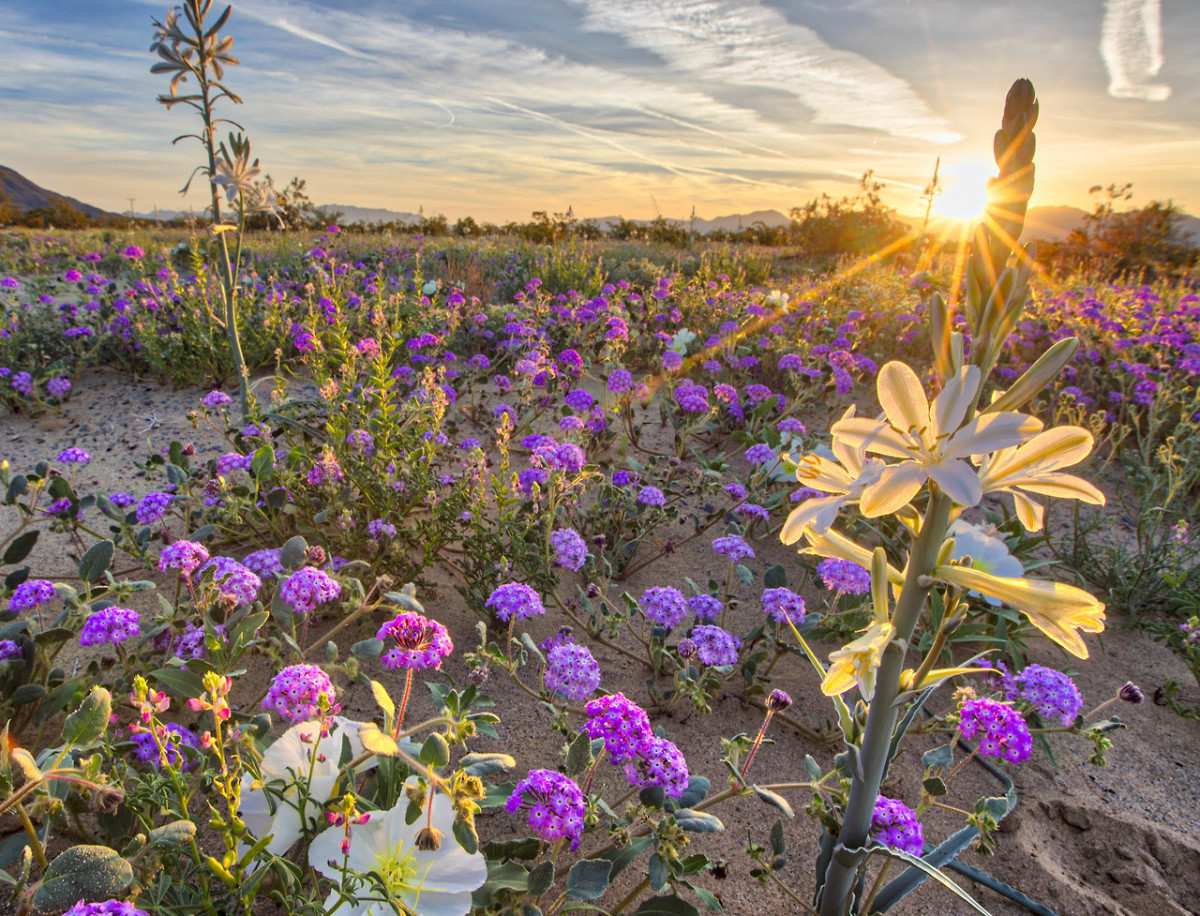 Wild for Wildflowers | U S  Department of the Interior
