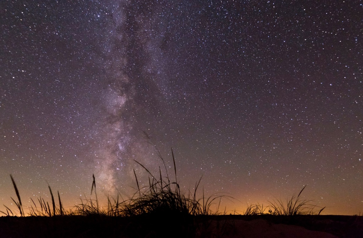 A  silhouette of a single patch of grass sit in the foreground while stars and the milky way illuminate the sky.