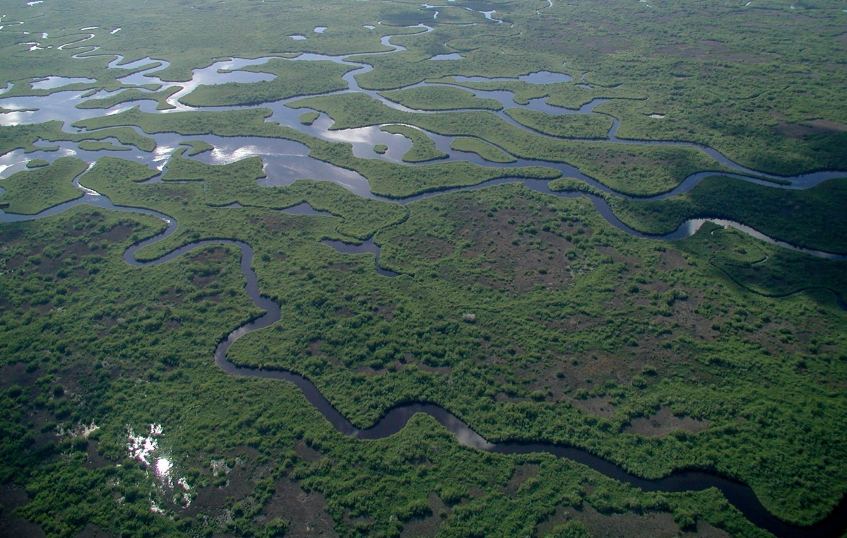 Channels of water flow through wetlands