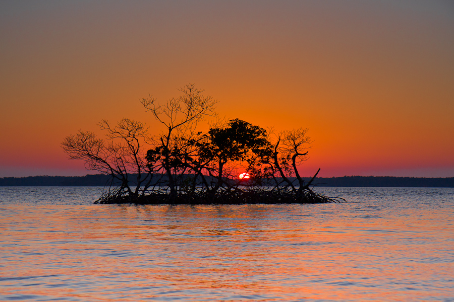 The sun sets in the background illuminating the sky in reds and orange, the sillhouette of a mangrove tree in the middle of the water