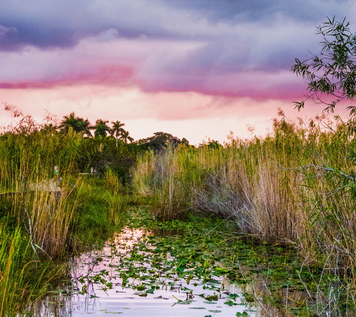 A pink stormy sky over a green wetlands