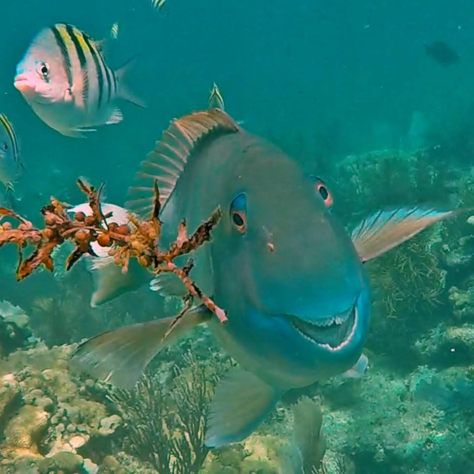 Large fish is front and center of the photograph as a reef and other smaller fish rests in the background