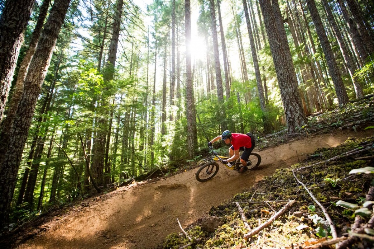 A mountain biker flies down a turn as the sun shines through the pines at his back.