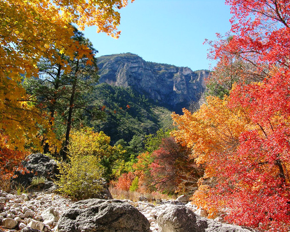 A flat topped mountain can be seen through a gap in trees showing bright fall colors.