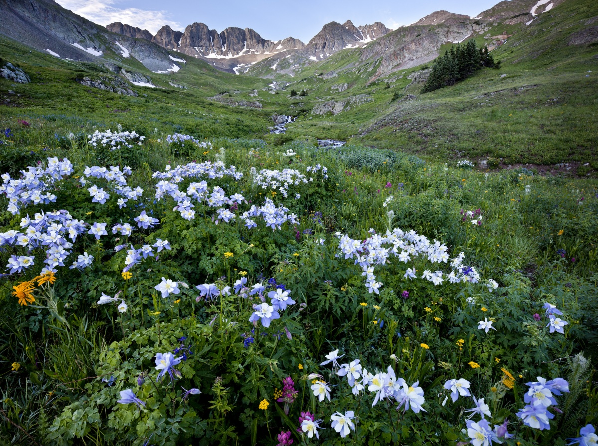 The Color Of Summer Wildflowers On Public Lands Us Department
