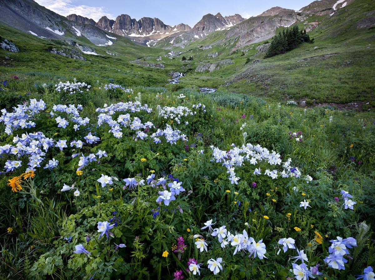 mountain peaks, green flowery meadows