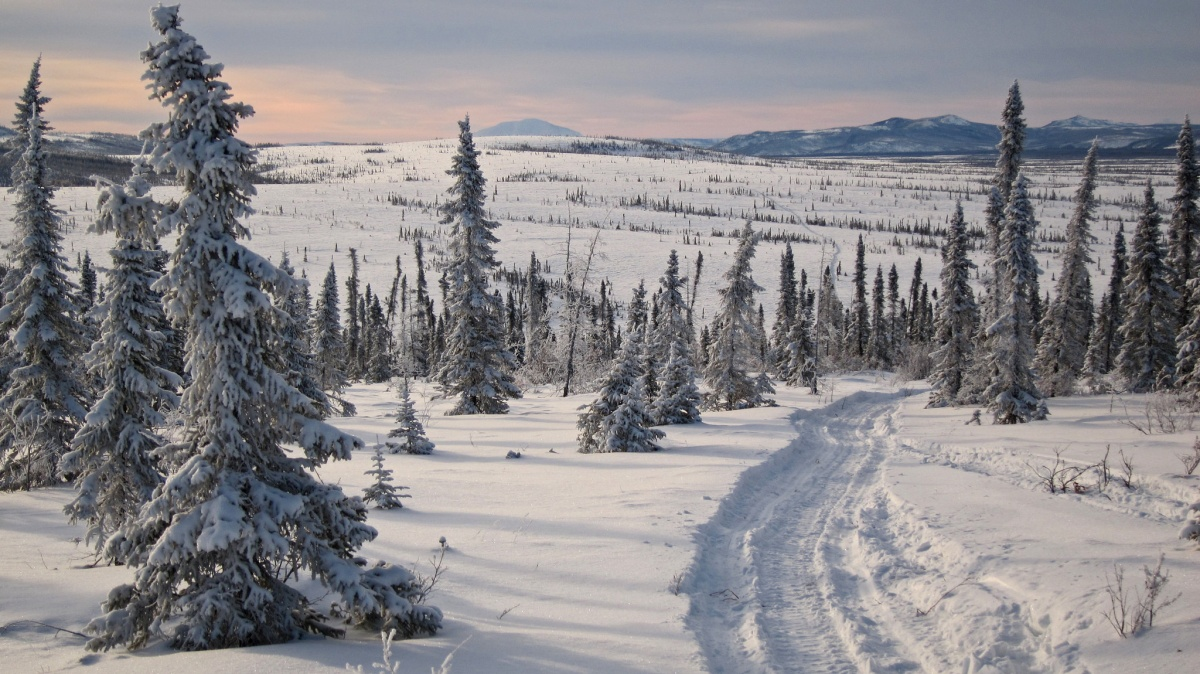 A narrow trail curves through a snow covered landscape of scattered trees and distant mountains.