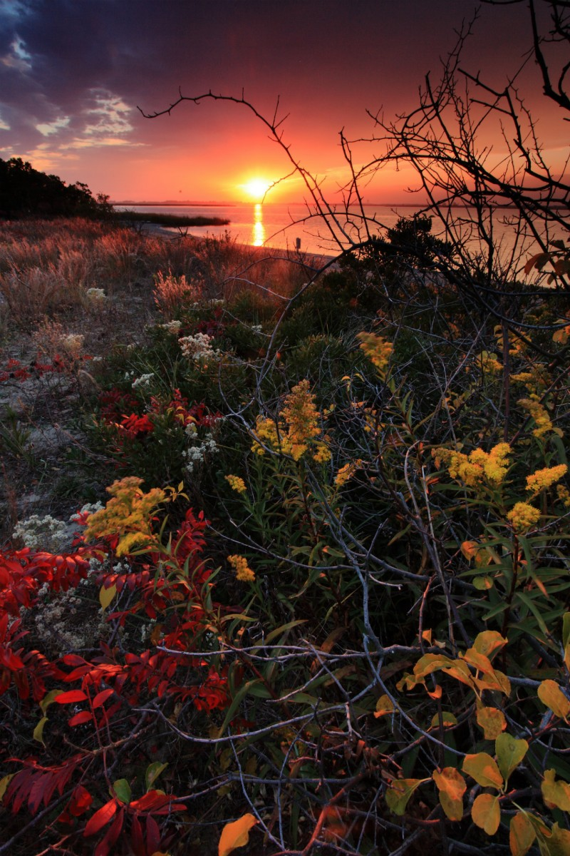 Bushes with red and yellow leaves grow in a field next to a wide bay under a pink sunset sunrise sky.