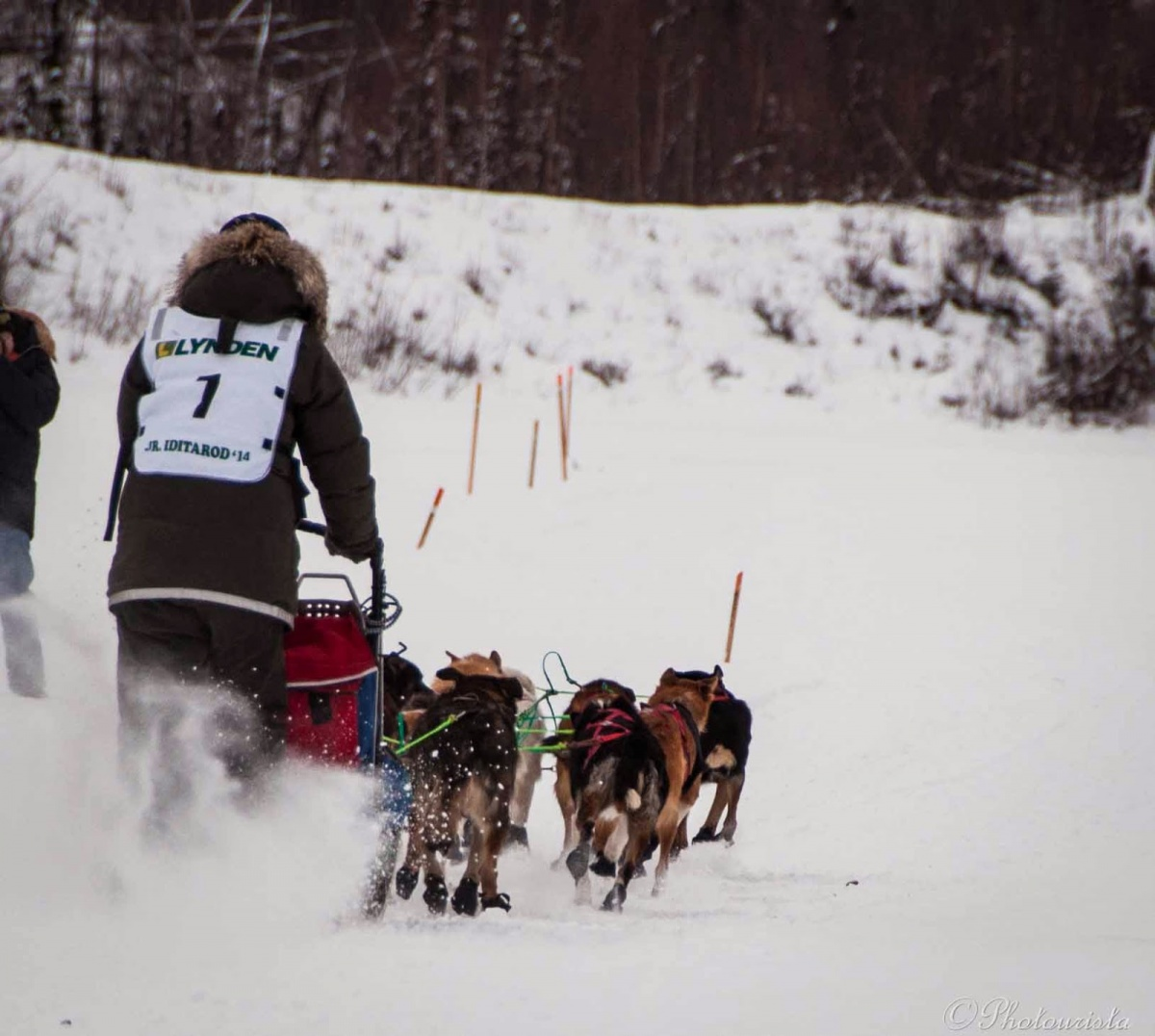 Young woman mushing with dogs at the junior Idiatrod sled dog race