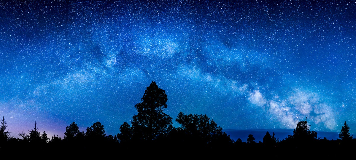 Silhouettes of trees stand against a vibrant blue, starry sky. The Milky Way perfectly arcs above the trees.