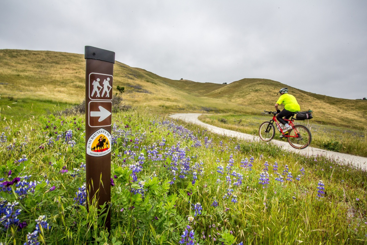 A bicyclist rides a trail with purple flowers and a trail post to the left of the photo