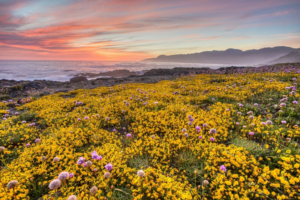 field of wildflowers and beach in background