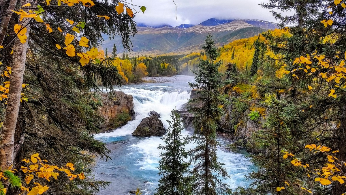A waterfall pours over a large boulder in the middle of a blue river that is bordered by tall green and yellow trees.