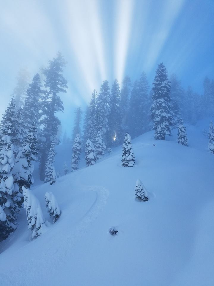 Light streams through snow covered trees on a steep mountain slope.