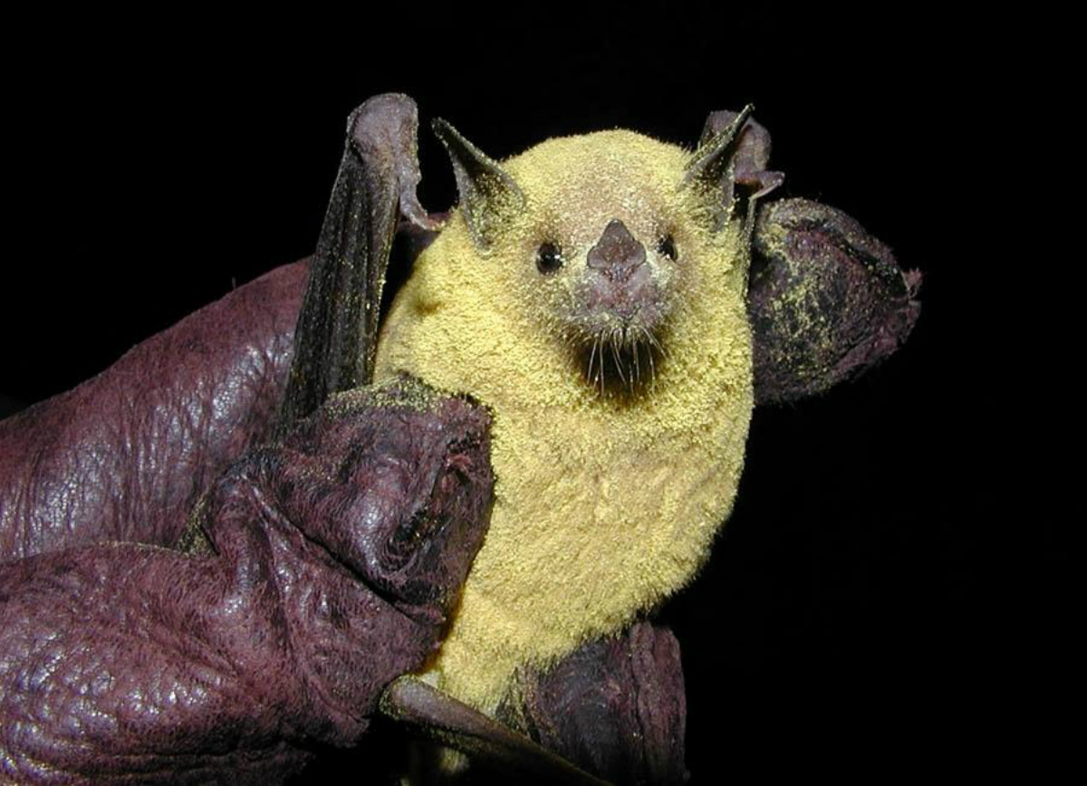 9 Of The Coolest Bat Species In The United States U S