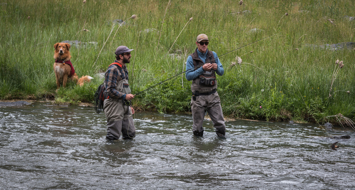 Two men in waders stand in a shallow river with fishing poles as a dog sits on the grassy bank watching them.