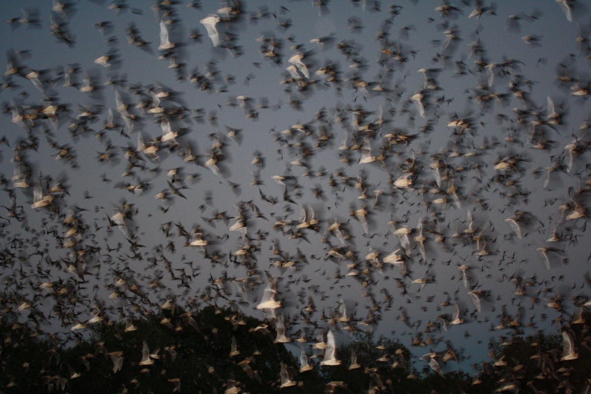 Hundreds of bats fly past the camera in a blur of movement.