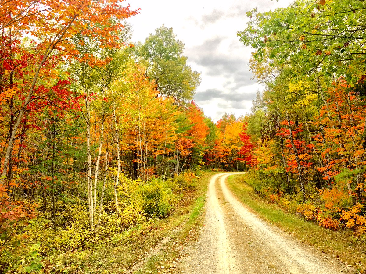 A dirt road curves through a forest in the fall.
