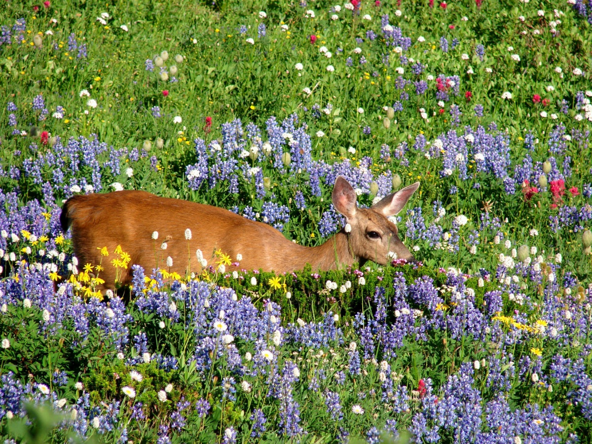 A small tan deer stands on a sloping hillside covered in colorful flowers.