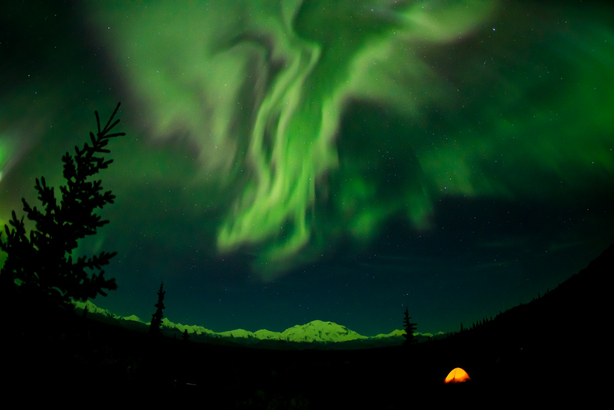 The northern lights glow green above the trees and one orange tent in Denali.