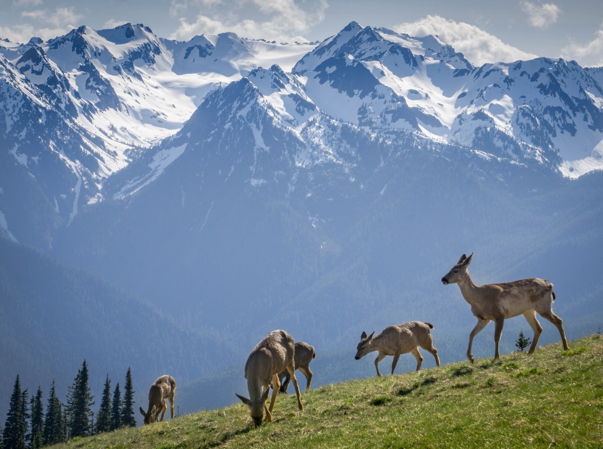 11 Things You Didn't Know About Olympic National Park | U ...