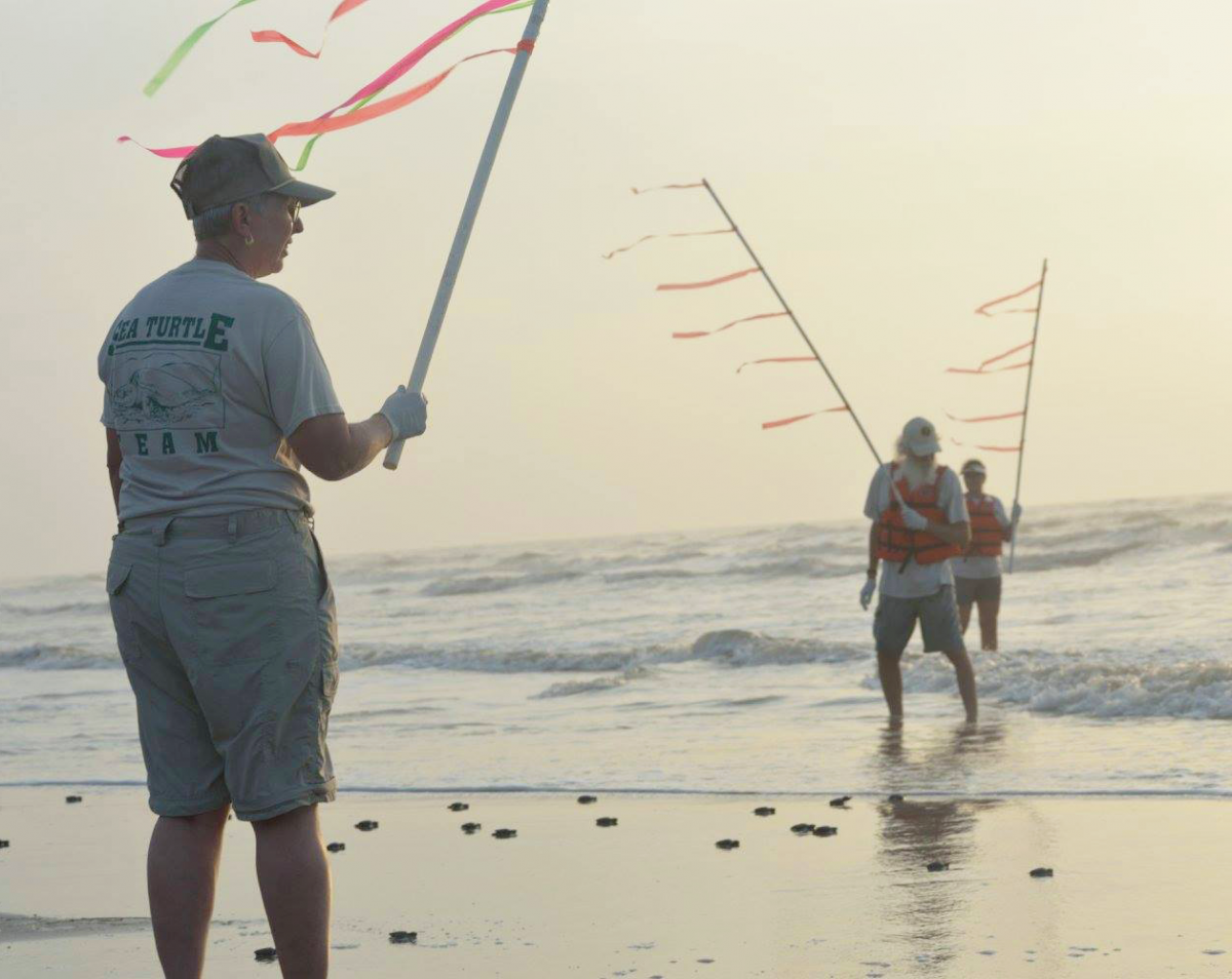 Volunteers stand near the sea with colorful flags helping sea turtle hatchlings reach the water