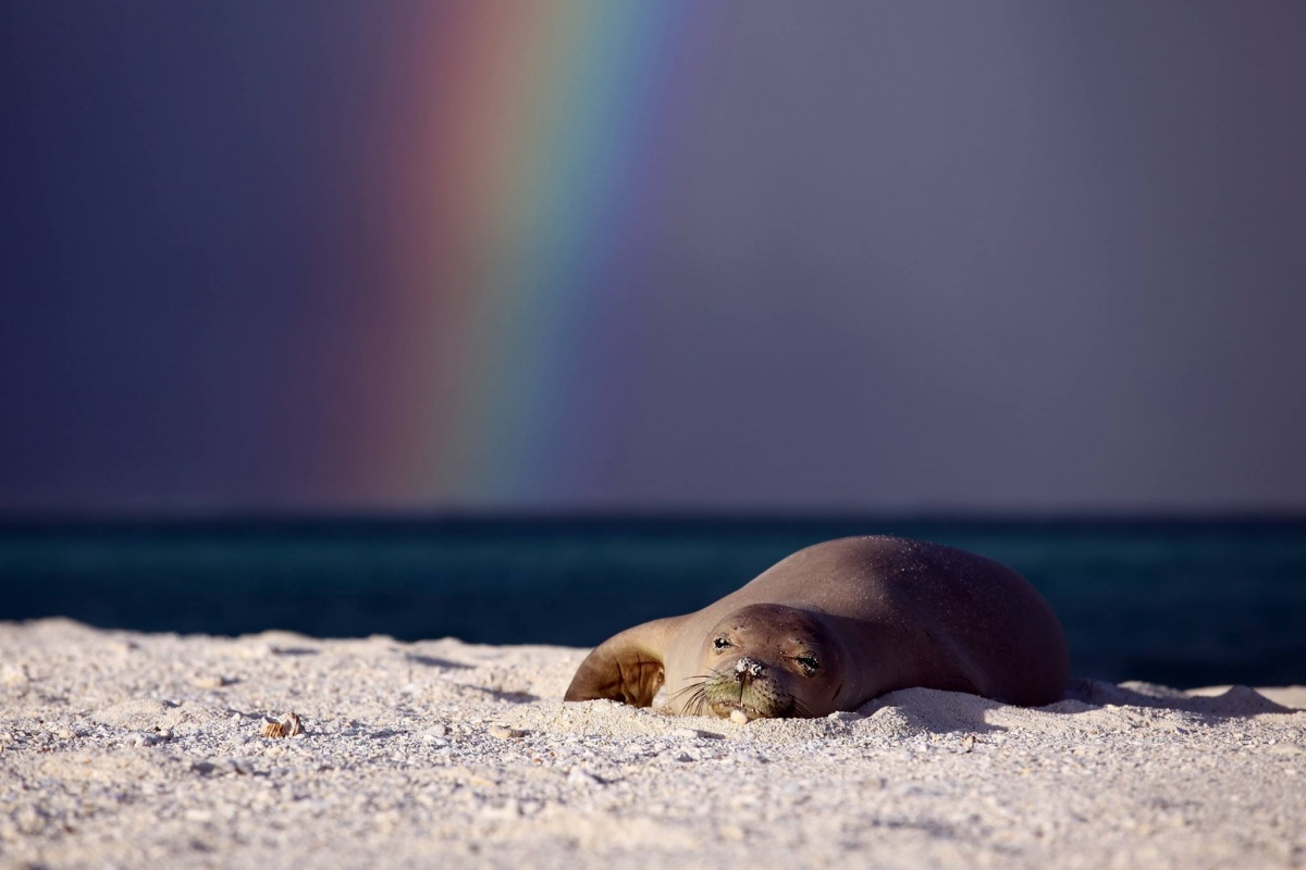 A seal lies on sand and rock, water and a rainbow in the background
