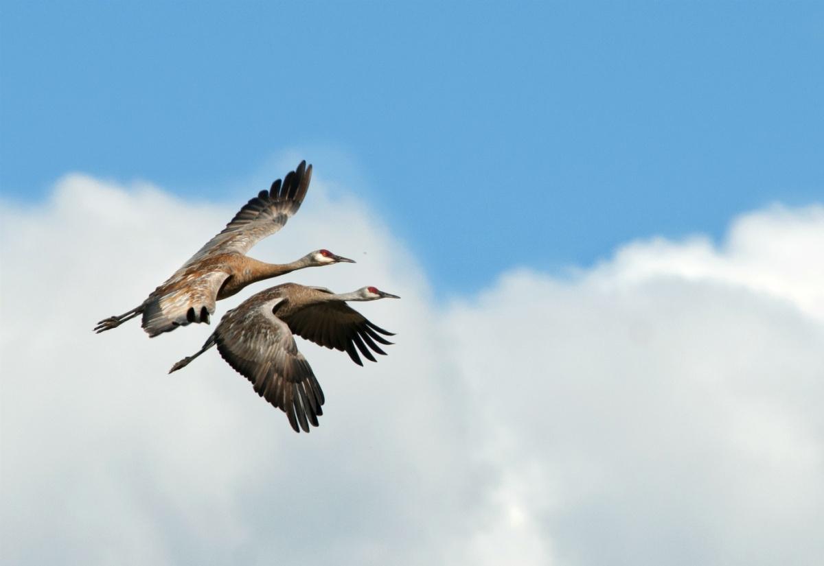 Flight of Fancy: 12 Amazing Birds | U S  Department of the