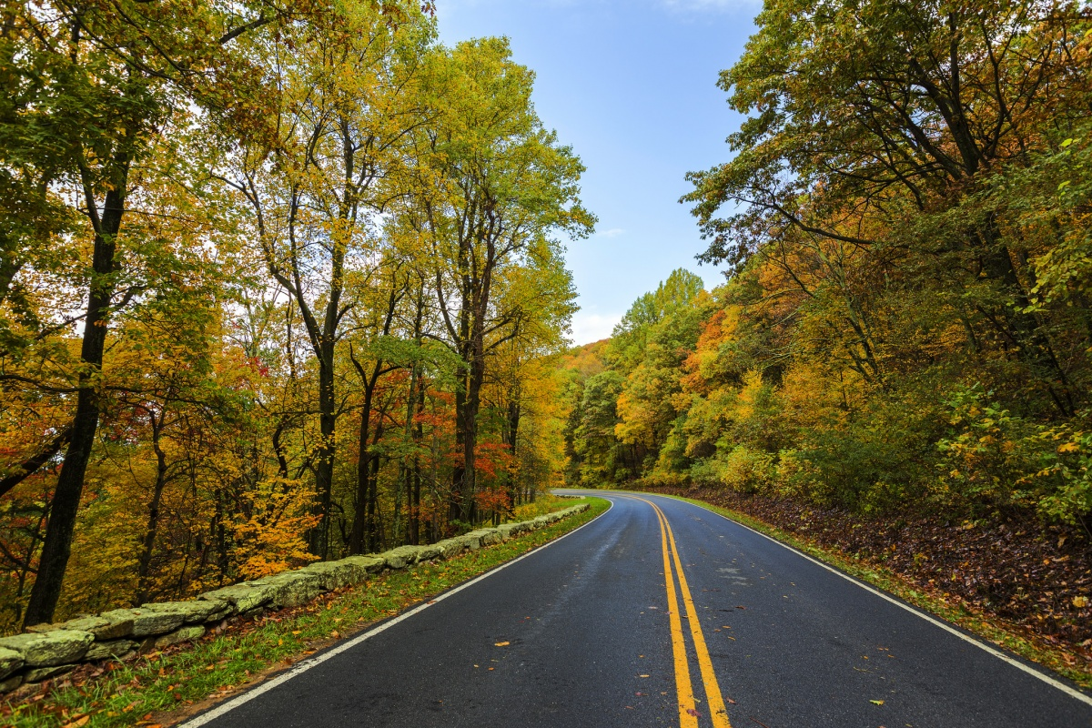 A road winding through trees with autumn-colored leaves on Skyline Drive