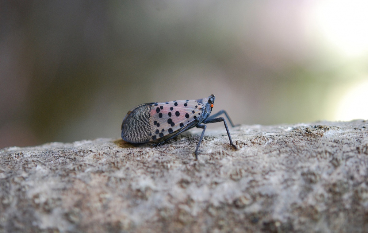 A small dotted insect stands on a log.
